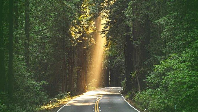 Eine Straße, die durch einen Wald führt.